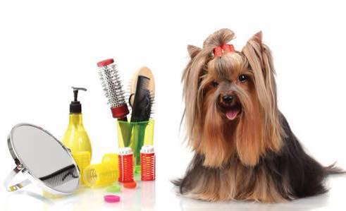 Big and Small Dog Grooming