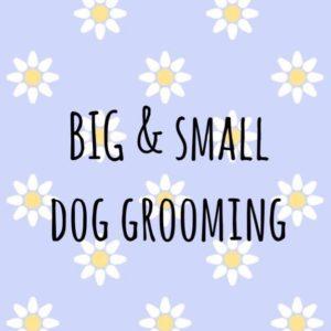 Big and Small Dog Grooming
